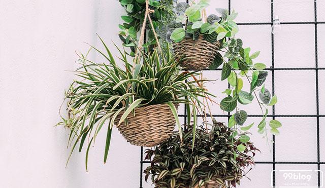 tanaman hias gantung