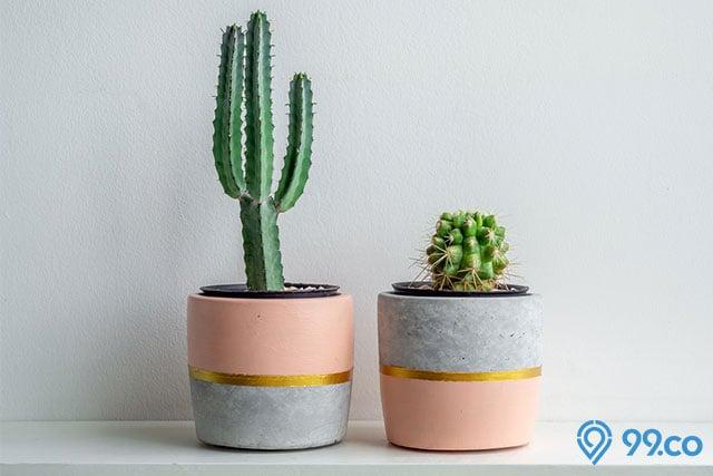 tanman hias indoor kaktus
