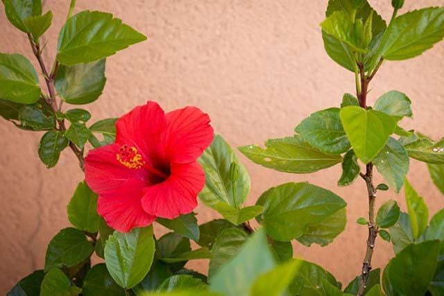 15 Tanaman Hias Tahan Panas Matahari Yang Mudah Dirawat