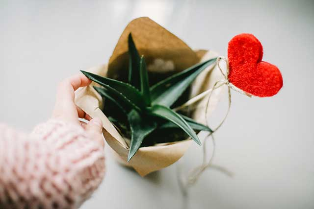 tanaman indoor