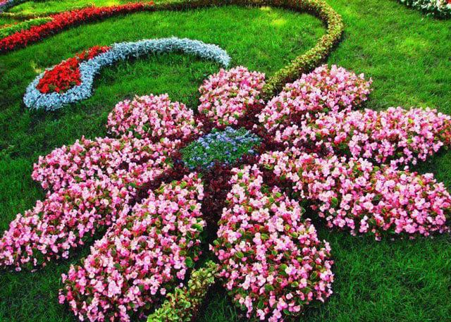taman bunga depan rumah