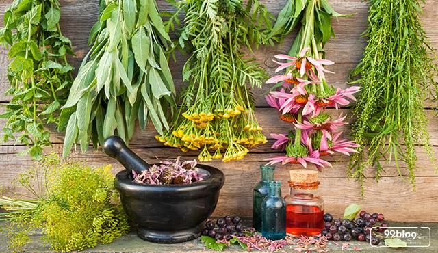7 Tanaman Obat yang Ada di Halaman Rumah. Khasiatnya Mantap!