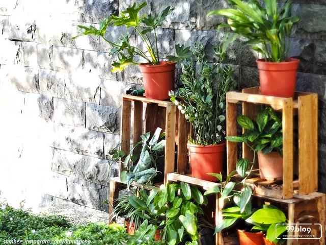 tanaman tropical