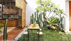 dekorasi tropical tanaman tropical