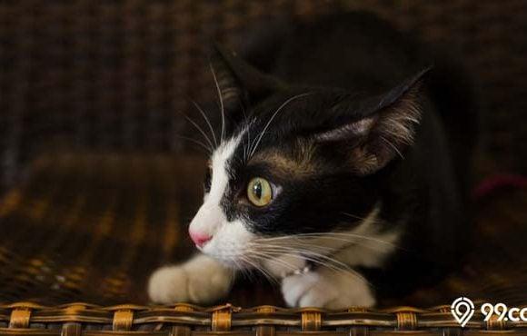 tanda-tanda kucing melihat hantu