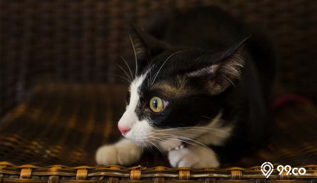 5 Tanda-Tanda Kucing Melihat Hantu, Tampak dari Suara hingga Perilakunya | Hati-Hati, ya!