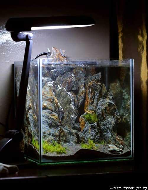 5 Tema Aquascape Yang Mempercantik Ruangan Menakjubkan