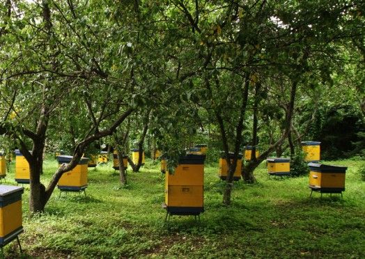 tempat budidaya lebah