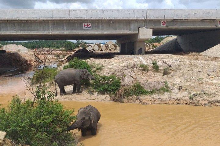 terowongan gajah riau