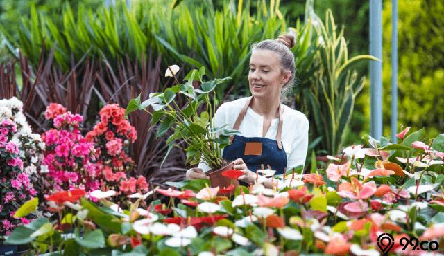 tips bisnis tanaman hias
