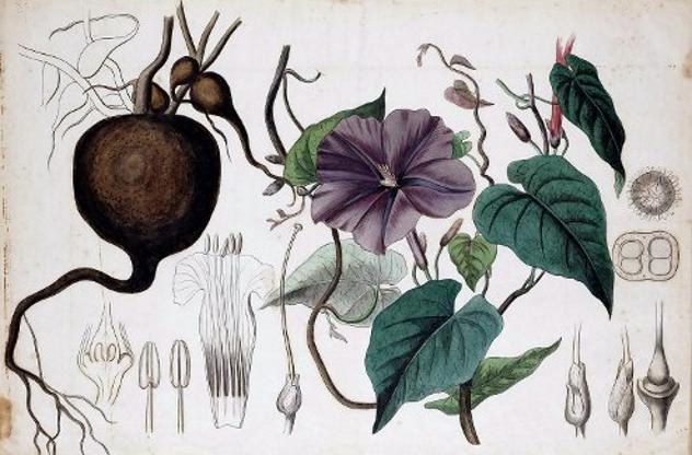 bentuk jimat tumbuhan