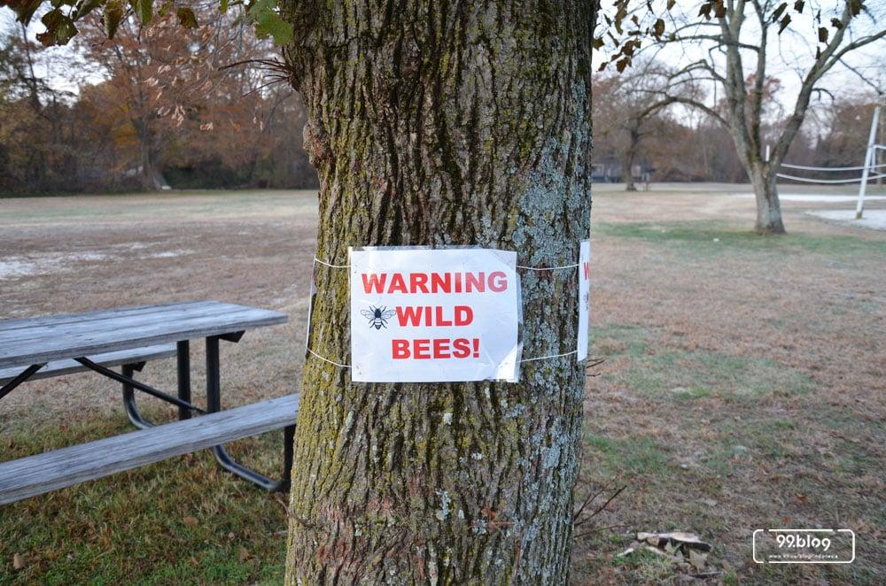 menghindari sengatan lebah