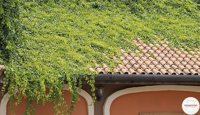 Atap hijau