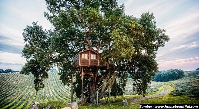 5 Rumah Pohon Paling Menakjubkan Di Dunia Suka Yang Mana
