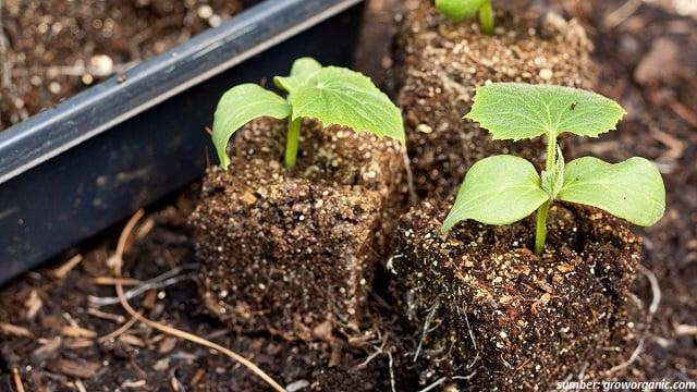 manfaat hidrogen peroksida untuk tanaman