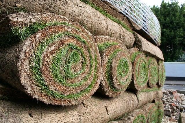 gulungan rumput