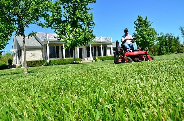 memotong rumput dengan mesin pemotong