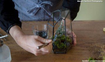 diy membuat terrarium tumbuhan lumut untuk hiasan di rumah