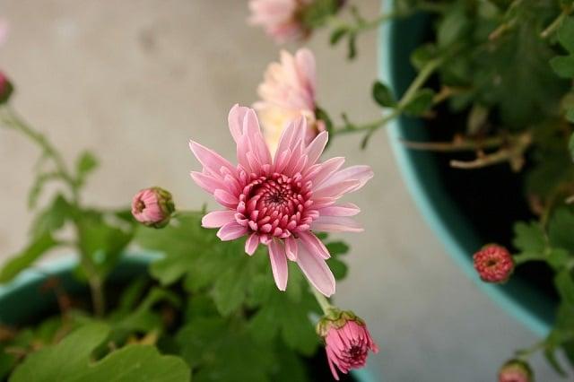 makna bunga