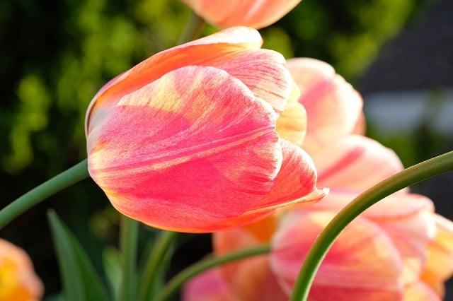 15 Arti Bunga Ini Sangat Dalam Awas Salah Pilih Ya