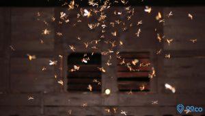 cara mengusir ngengat
